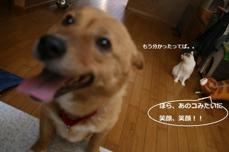 犬もへっちゃら!_f0242002_18324248.jpg