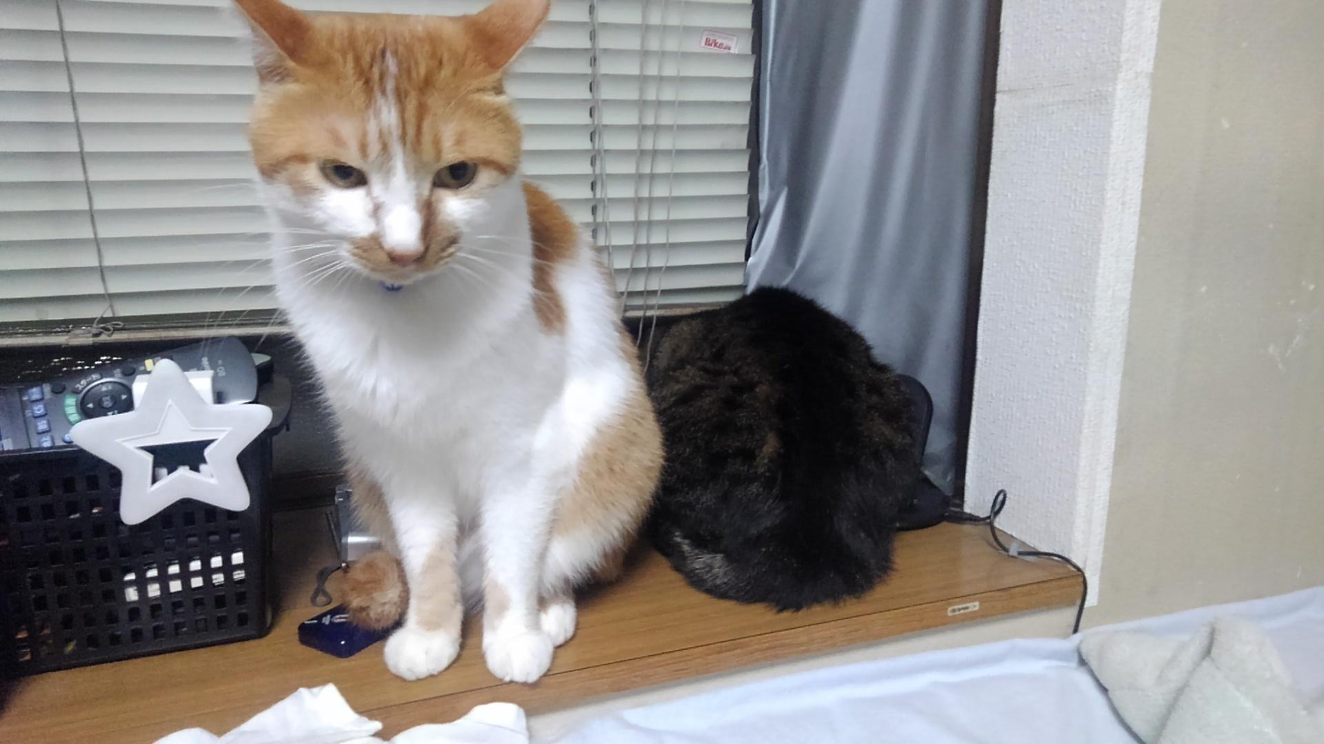 【猫】近くて遠い…_f0141609_23240972.jpg