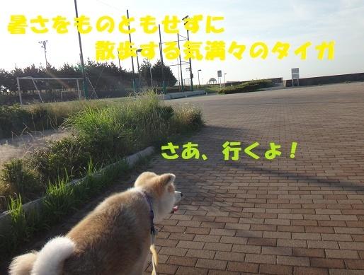 f0121712_08400506.jpg