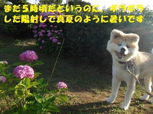 f0121712_09455047.jpg
