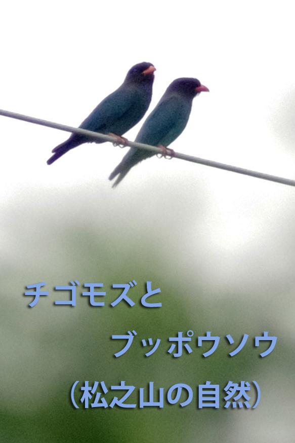 b0144049_10045745.jpg