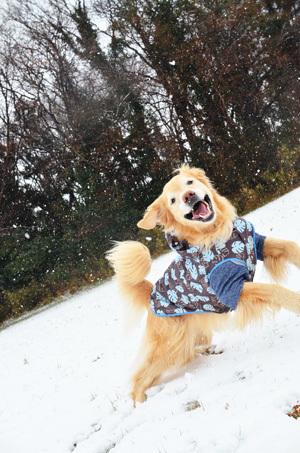 雪ーーーー♪_f0044853_10345986.jpg