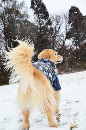 雪ーーーー♪_f0044853_10350981.jpg