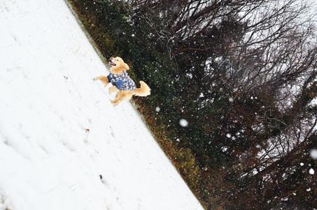 雪ーーーー♪_f0044853_10351791.jpg