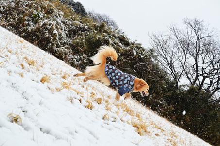 雪ーーーー♪_f0044853_10353406.jpg