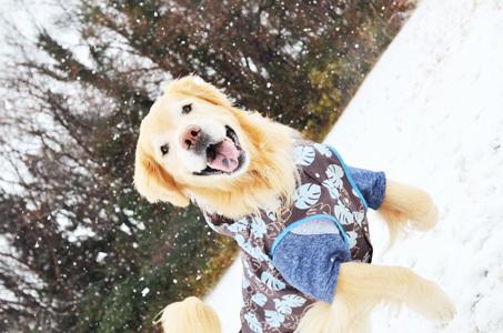 雪ーーーー♪_f0044853_10382706.jpg