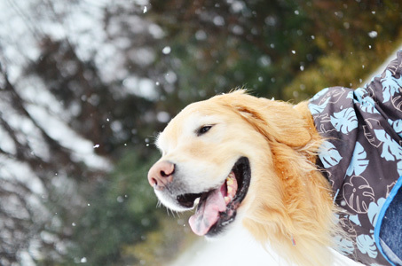雪ーーーー♪_f0044853_10384253.jpg