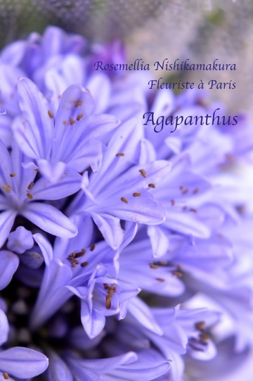 Fleuriste à Paris パリのお花屋さんレッスン_d0078355_10142594.jpg