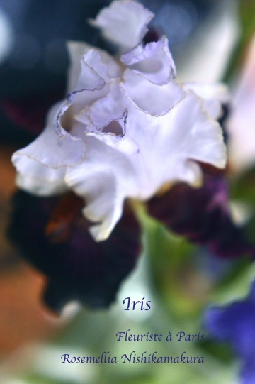 Fleuriste à Paris パリのお花屋さんレッスン_d0078355_10154473.jpg