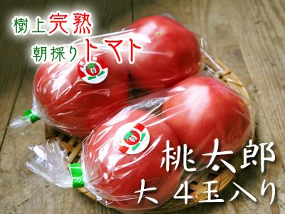 樹上完熟の朝採りトマト 最旬食材!大好評販売中!朝採り収穫の様子を現地取材!_a0254656_16433140.jpg