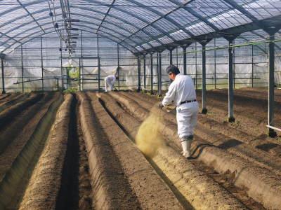 樹上完熟の朝採りトマト 最旬食材!大好評販売中!朝採り収穫の様子を現地取材!_a0254656_17002072.jpg