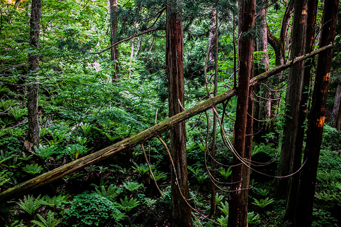 十和田湖には神様がいっぱい_e0076761_09143755.jpg