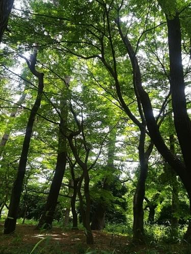 新宿御苑と銀座シックス_a0111166_17144004.jpg