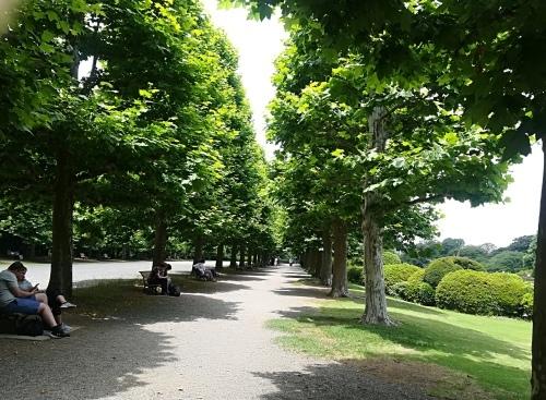 新宿御苑と銀座シックス_a0111166_17241305.jpg