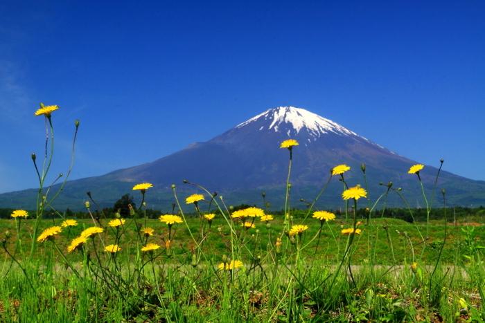 30年5月の富士(34) 野に咲く花と富士_e0344396_12255928.jpg