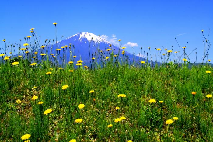 30年5月の富士(34) 野に咲く花と富士_e0344396_12271376.jpg
