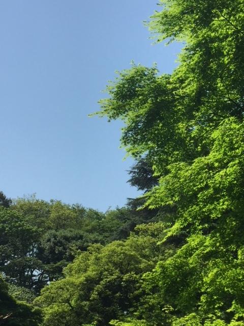 岡山県教育長の「進路を切り拓く力」という話に関して。_c0326333_22554711.jpg