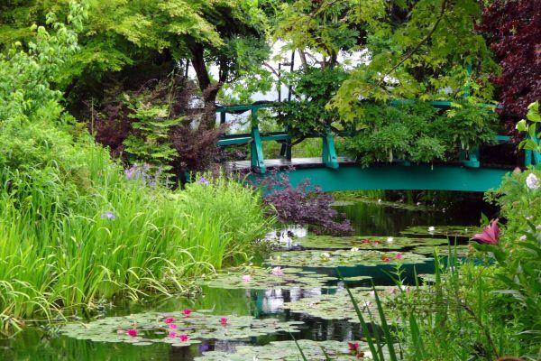 梅雨入りしましたね。~北川村「モネの庭」マルモッタン~_d0145934_15542548.jpg