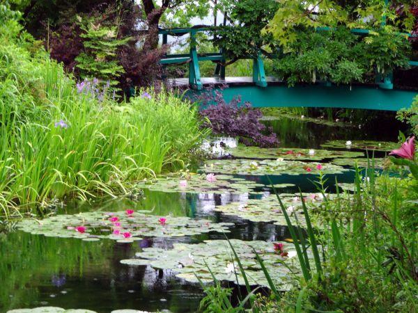 梅雨入りしましたね。~北川村「モネの庭」マルモッタン~_d0145934_15543948.jpg