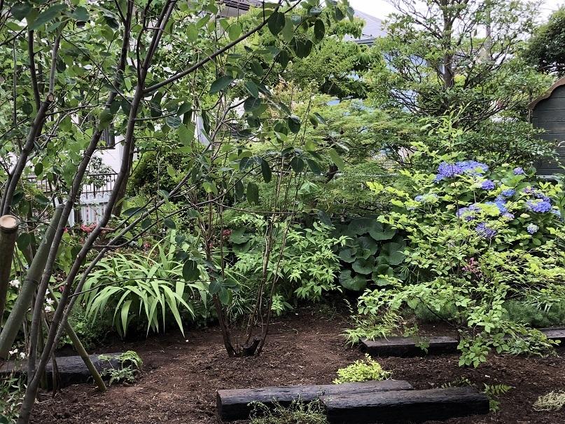 涼しげな風が吹くような雑木の庭へ。_e0356655_18152131.jpg