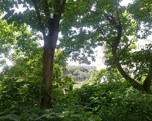 新宿御苑と銀座シックス_a0111166_21535008.jpg
