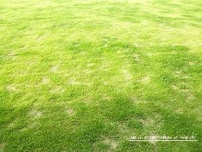 キレッキレの芝刈り機がやって来た♪_f0368691_19151609.jpg