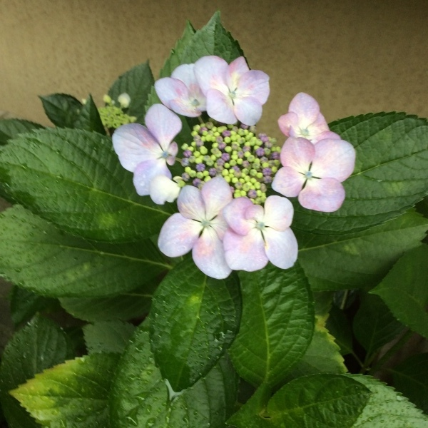 花の名前_d0123492_10221263.jpeg
