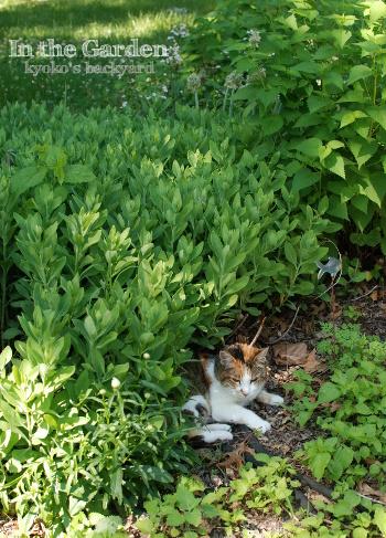 花壇の中で涼む季節 / イメージ崩壊_b0253205_05105934.jpg