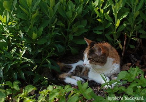 花壇の中で涼む季節 / イメージ崩壊_b0253205_05112921.jpg