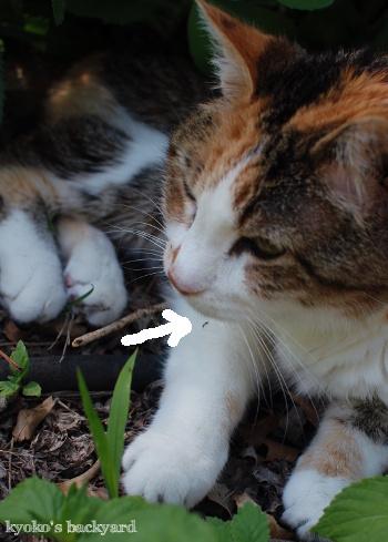 花壇の中で涼む季節 / イメージ崩壊_b0253205_05120815.jpg