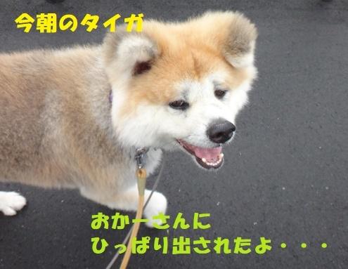 f0121712_08471474.jpg