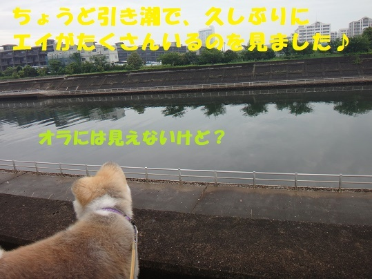 f0121712_08560792.jpg