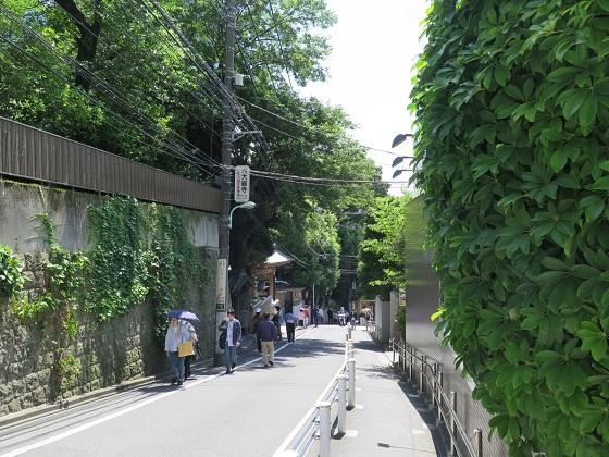 緑滴る行人坂界隈_c0192215_19154017.jpg