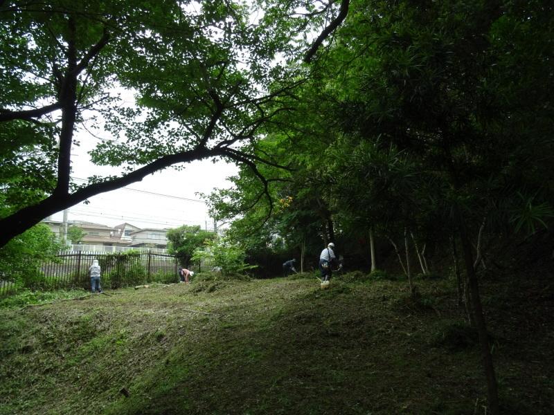 ササユリ終了宣言・・・うみべの森_c0108460_22361768.jpg