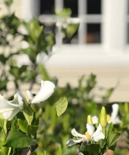 花たちのバトンタッチ_f0121167_10300793.jpeg