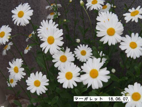 f0342982_23003038.jpg