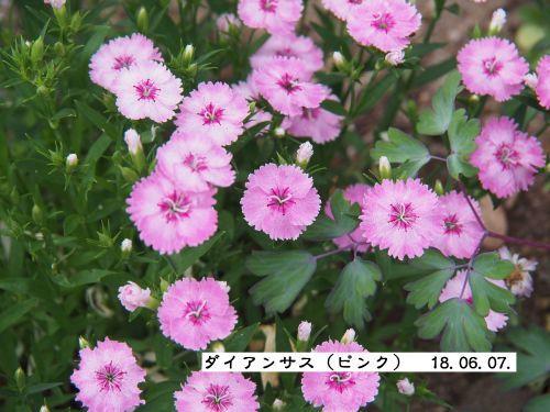 f0342982_23060140.jpg