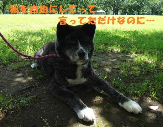 f0121712_15100803.jpg
