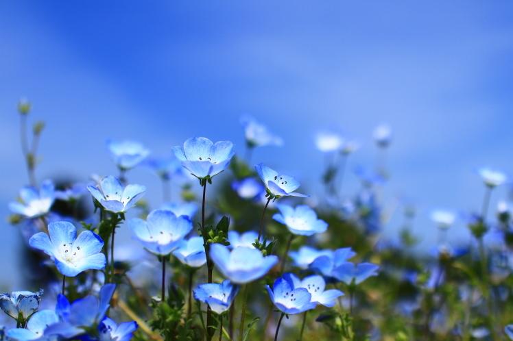 青色 ネモフィラ 鶴見緑地_f0209122_19270023.jpg