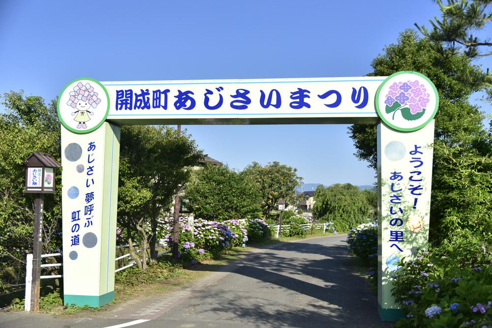 神奈川県・開成町の紫陽花祭(改訂版)_e0367330_21453374.jpg