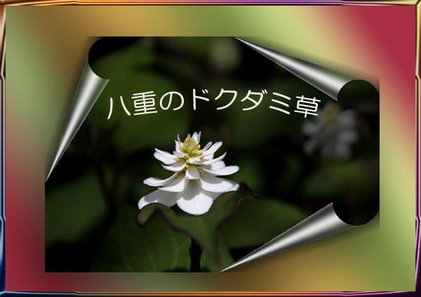 b0233938_20385146.jpg