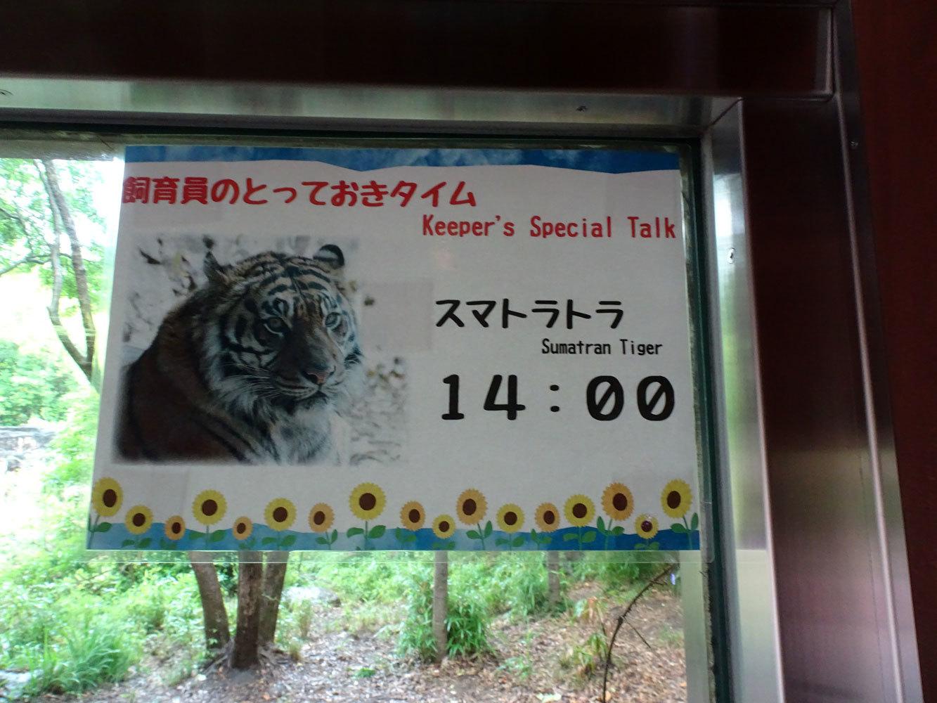 トラと雨宿り_b0023856_06595915.jpg