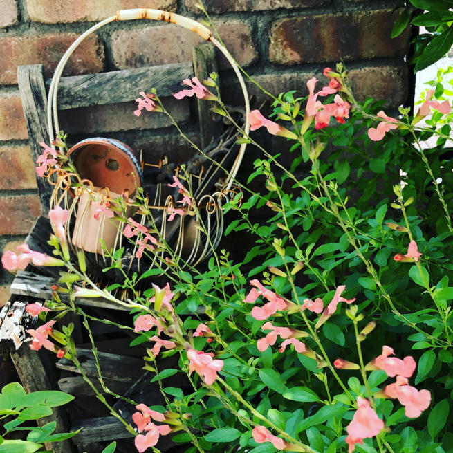庭の端っこ_a0127658_09593070.jpg