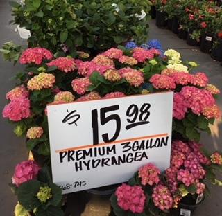 紫陽花の季節_e0350971_11340098.jpg