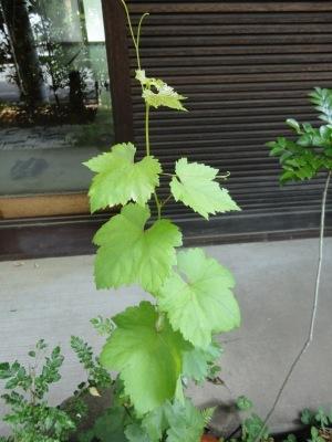 萌える緑が楽しい、そして忙しい季節_a0122098_09045496.jpg