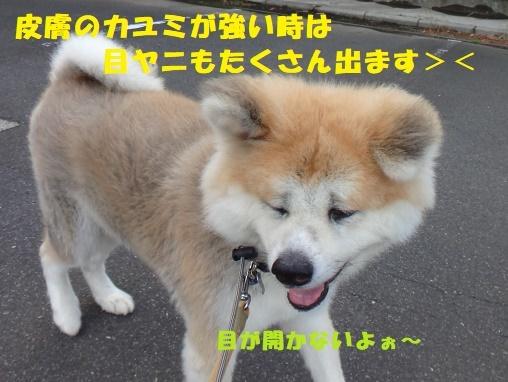 f0121712_21441972.jpg