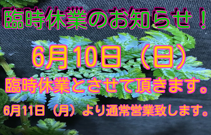 e0254814_18234685.jpg