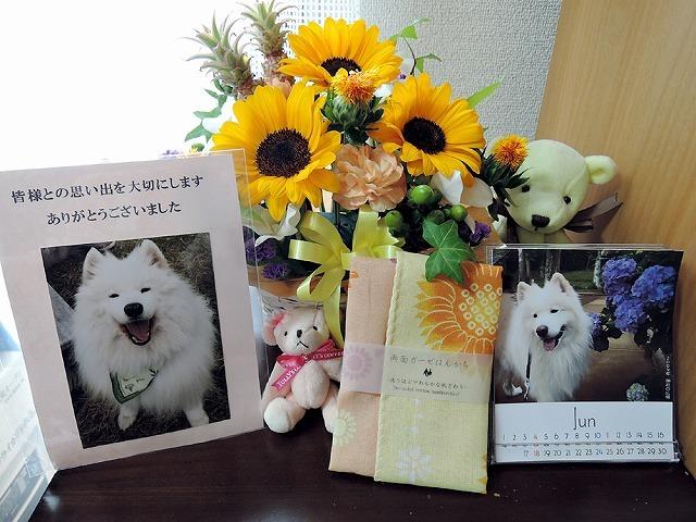 キラキラ笑顔_c0062832_16492510.jpg