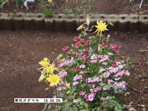 f0342982_22015467.jpg