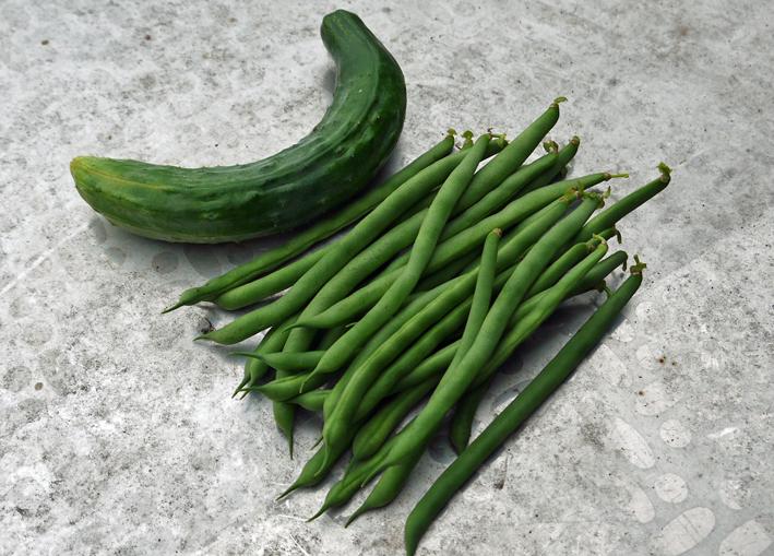 地這い胡瓜とつるありインゲン初収穫6・10_c0014967_1738863.jpg